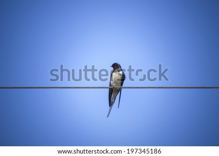 swallows on wire - stock photo