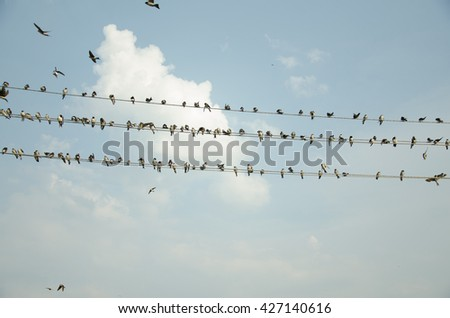 Swallows on wire