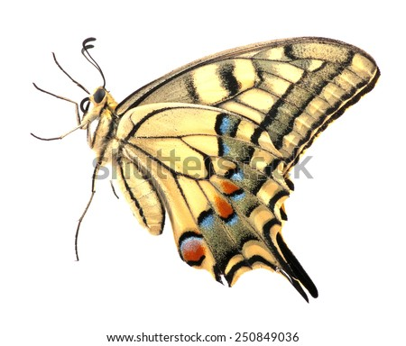 Swallowtail butterfly on a white background - stock photo