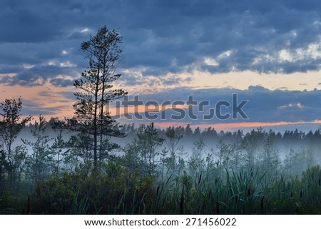 Swamp and the morning fog in Latvia - stock photo