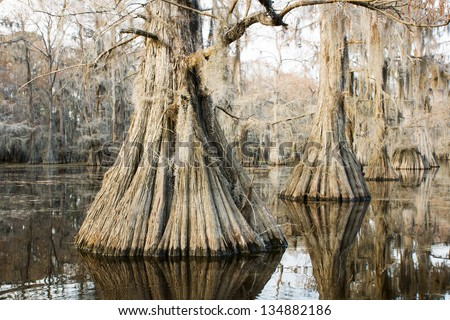 """Swamp (bald) cypress in the lake at sunset and hanging from a strand Spanish moss in a state park, """"Caddo Lake"""", Texas, USA - stock photo"""