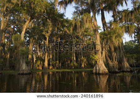 Swamp bayou scene of the American South featuring bald cypress trees and Spanish moss in Caddo Lake Texas - stock photo