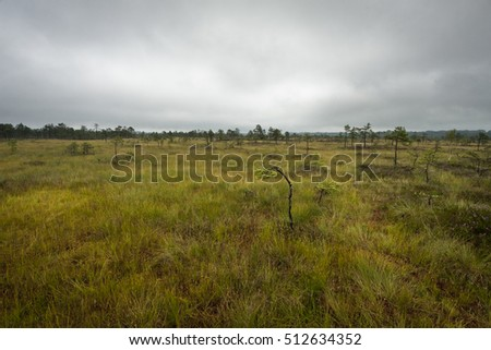swamp in baltic states
