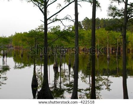 Swamp Sunset - stock photo
