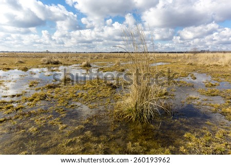 Swamp under nice sky with clouds at spring time - stock photo