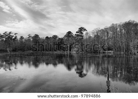 Swamp water on a river in North Carolina - stock photo