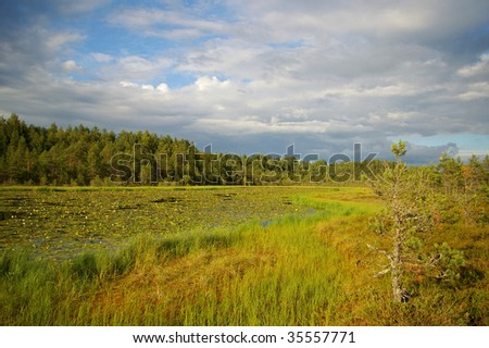 swamp with lake full of waterlilies on cloudy summer day in Estonia - stock photo