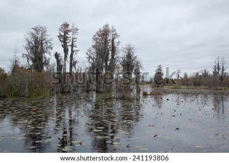 Swamp with Spanish Moss on the trees and reflection of trees and sky in the dark water of Okefenokee Swamp, Georgia - stock photo