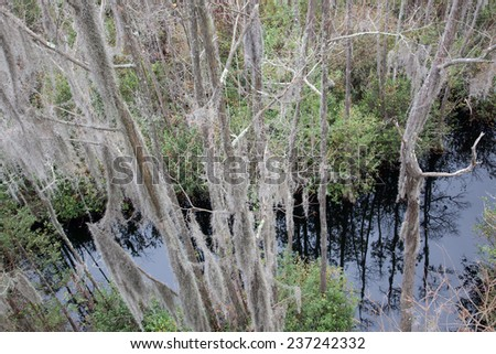 Swamp with  trees covered in Spanish Moss, from the Okefenokee Swamp in South East Georgia, USA