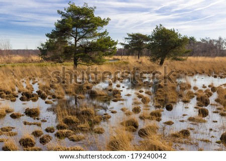 Swamp with trees in national park De Groote Peel in The Netherlands - stock photo