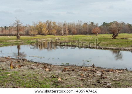 Swamps and lakes of central Texas during Fall - stock photo