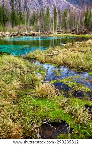 Swampy mossy stream near Blue Geyzer lake in Altay Taiga - stock photo