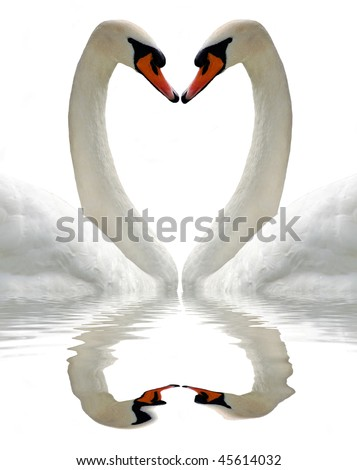 Swan isolated