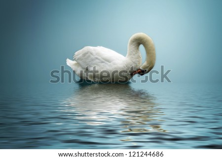 Swan on blue lake - stock photo
