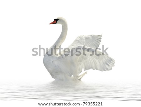 Swan on the white surface. - stock photo