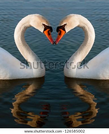 Swans heart - stock photo