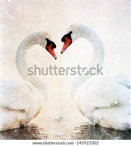 Swans heart - vintage photo - stock photo