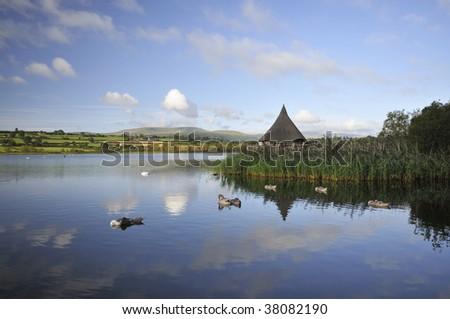 Swans on Llangorse Lake, Llangors, Brecon Beacons - stock photo