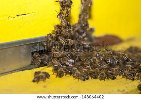 Swarm bee at entry hive - stock photo