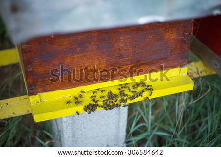 Swarm of bees in apiary - stock photo