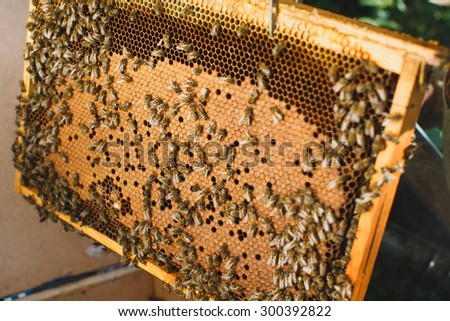 Swarm of bees on beautiful orange honeycomb with capped brood, close up - stock photo