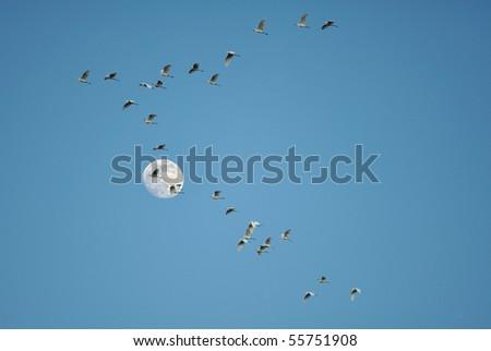 Swarm of birds on The Moon background. - stock photo