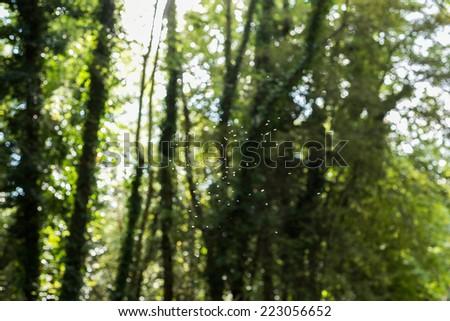 Swarm of midges against foliage background - stock photo