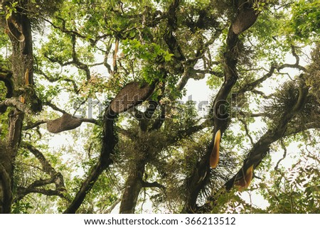 Swarm of wild bees and honeycomb hanging on the tree branch in Munnar, Kerala, India - stock photo