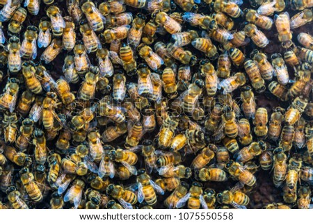 Swarm of working bees in a honey comb frame useful as a background.