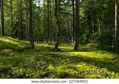 Sweden's forest - stock photo