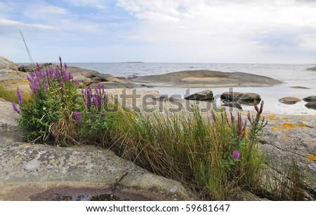 Swedish coast summer plants - stock photo