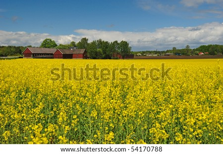 Swedish landscape with rapeseed meadow - stock photo