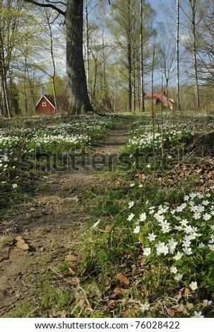 Swedish park footpath - stock photo