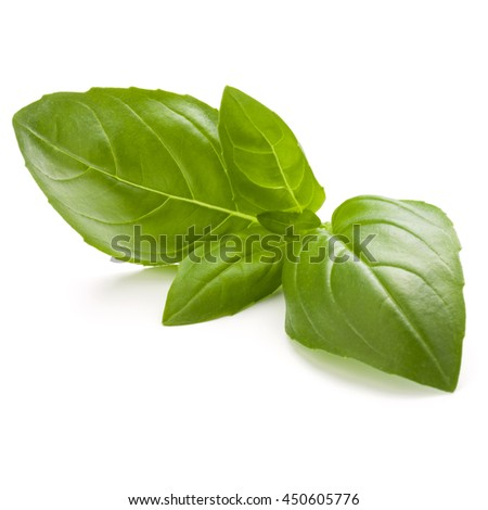 Sweet basil herb leaves isolated on white background closeup - stock photo