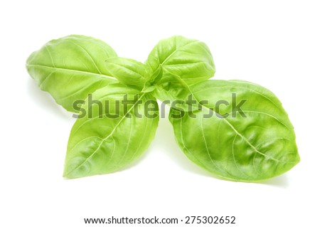 Sweet basil leaves on a white background - stock photo
