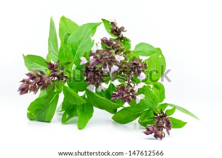 Sweet Basil or Thai Basil isolated on a white background. - stock photo