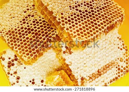 Sweet beautifu goldenl honeycomb with honey - stock photo