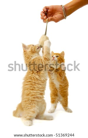 Sweet cat kittens is playing witty toy mouse - stock photo