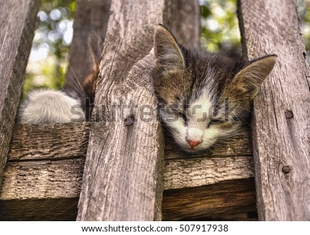 stock-photo-sweet-cat-s-dream-the-little
