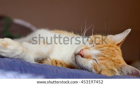 Sweet cat sleeping in bed. Comfort and warmth of home. - stock photo