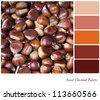 Sweet chestnut background colour palette with complimentary swatches. - stock photo