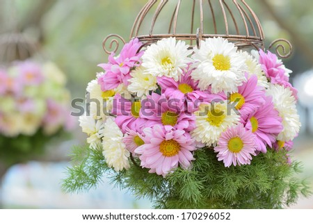 Sweet color flower in hanging basket. - stock photo