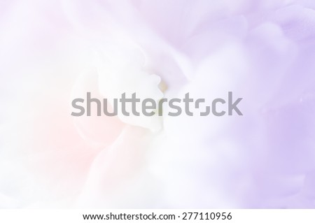 Sweet color flower in soft and blur style for background design