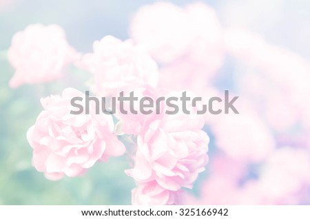 sweet color flowers in soft color and blur style for background - stock photo