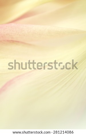 sweet color lotus petals in soft color and blur style for background - stock photo