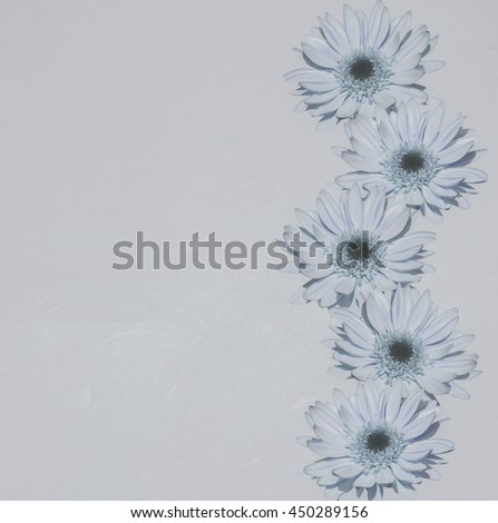 Sweet color of gerbera flowers on drawing paper texture in pastel tone use for soft background. - stock photo