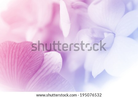 sweet color orchids in soft style for background - stock photo