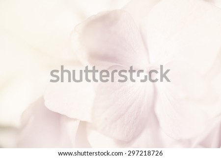 Sweet color pastel hydrangeas in soft color and blur style for background