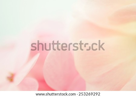 sweet color rose and hydrangeas in soft color and blur style for background - stock photo