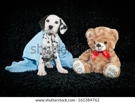 Sweet Dalmation puppy wrapped in a blue blanket with a cute teddy bear. - stock photo